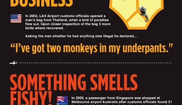 Anything to Declare Customs Infographic