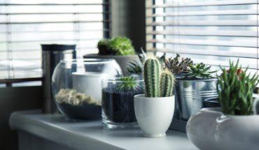 Benefits of Keeping Indoor Plants